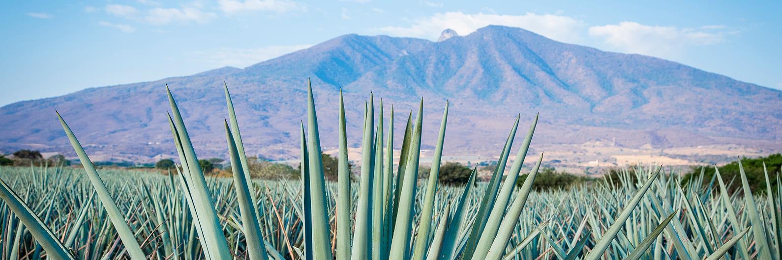 Cheap Flights From San Jose Ca To Guadalajara Frontier
